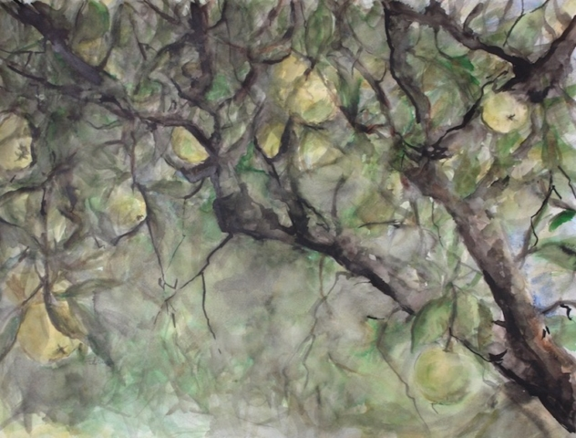 View inside an apple tree in the garden, with yellow apples. watercolor, inks on paper.sold
