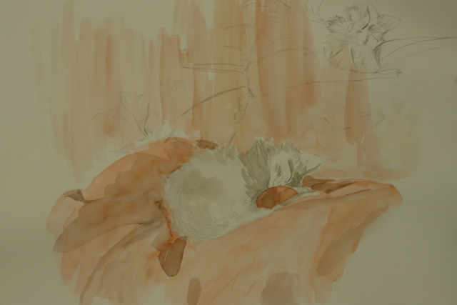 Sketch of a cat sleeping on a orange cushion. pen and watercolor on paper.not for sale