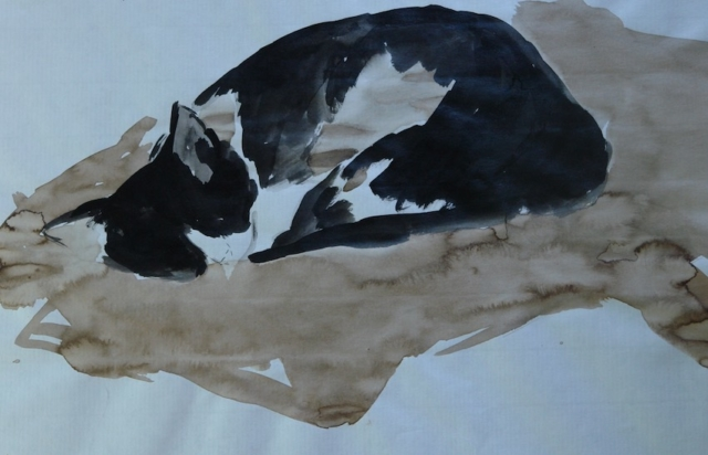 Sketch of a black and white cat. China ink and walnut stain on Ingres paper.