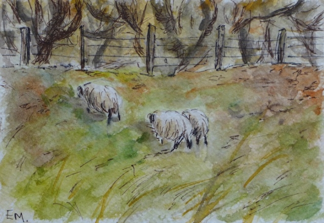 Sketch of 3 sheep in the garden of the B&B in Luskentyre. Scotland. watercolor and pen. sold