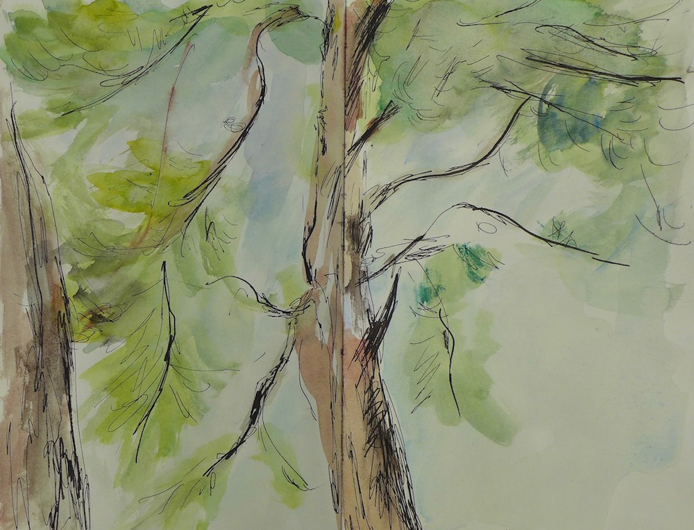 Sketch of pines and foliage at Caromb. ink pen and watercolor on paper book