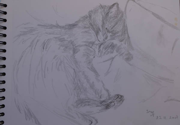 sketch of a baby cat sleeping. pencil on paper