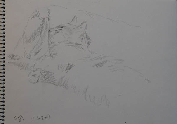 sketch of the cat Suzy sleeping. pencil