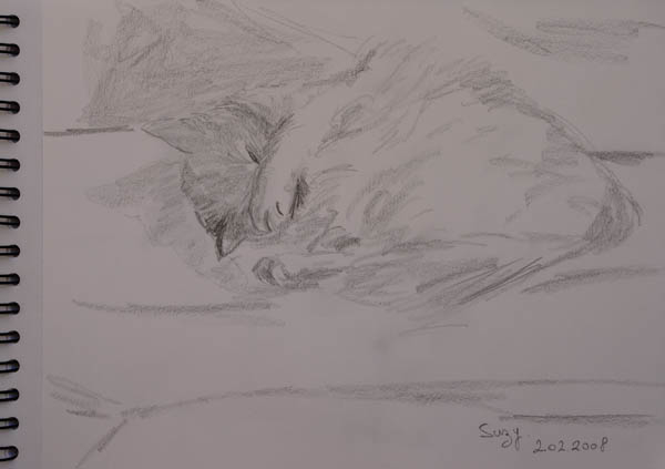 sketch of a cat sleeping. pencil on paper