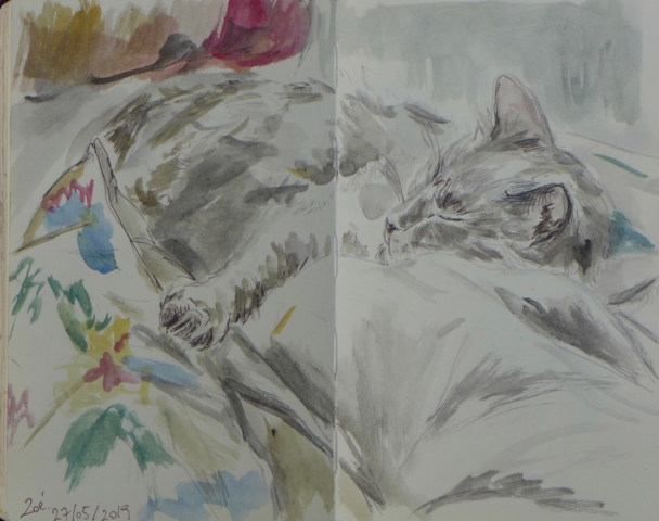 Sketch of a cat sleeping on cushions. ink pen and watercolor on paper book