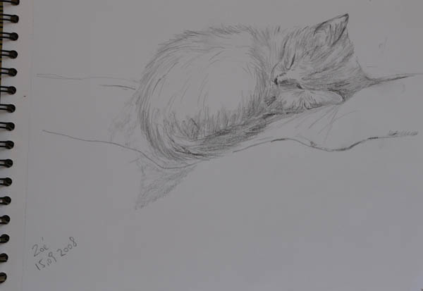 sketch of baby cat called Zoé, sleeping on the sofa. pencil on paper