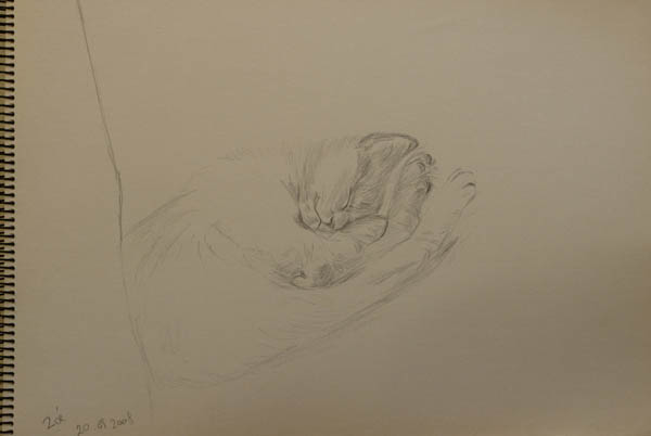 sketch of baby cat Zoé sleeping. pencil on paper